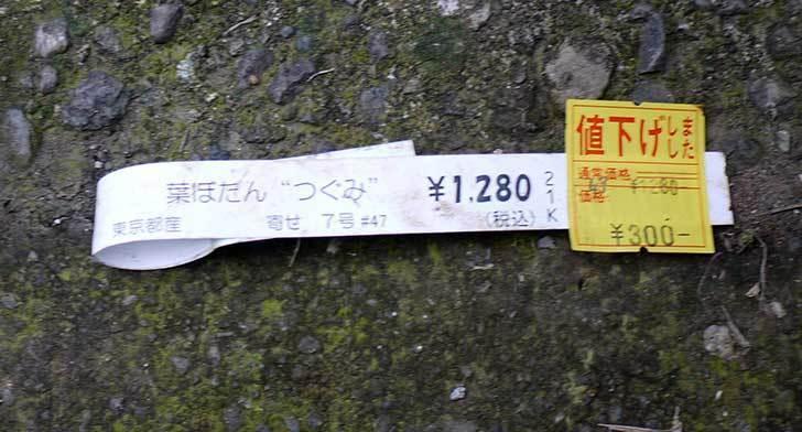 ハボタン-つぐみ-がホームズで300円だったので買って来た3.jpg