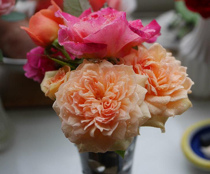バスシーバ(ツルバラ)の花が咲いた。2019年-7.jpg