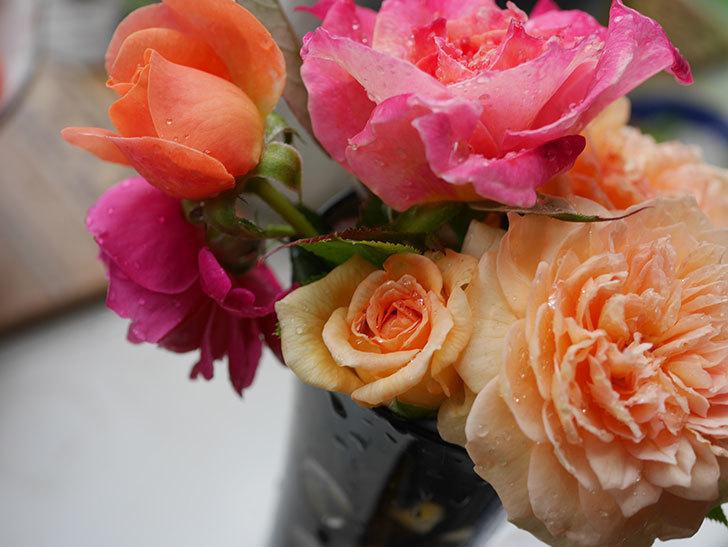 バスシーバ(ツルバラ)の花が咲いた。2019年-9.jpg