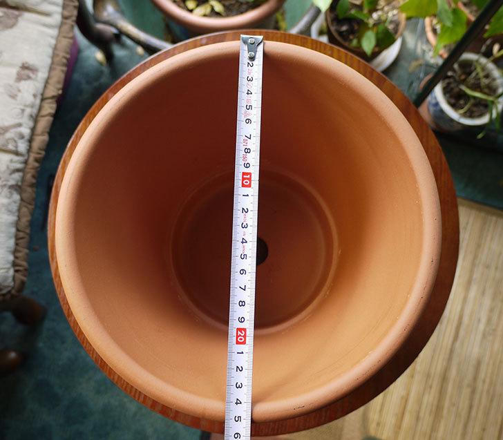 バッサム-25cmを楽天で買った4.jpg