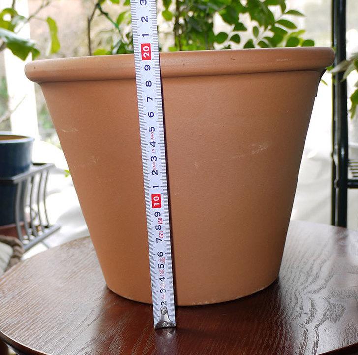 バッサム-27cmを楽天で買った5.jpg