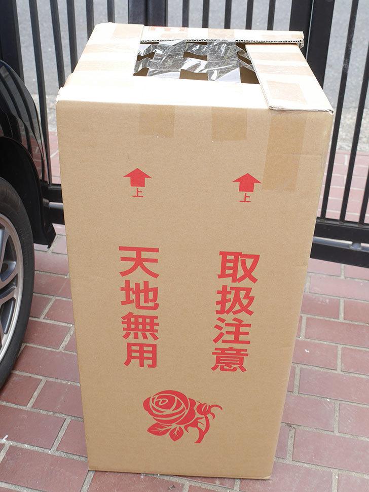 バラの大苗をはなはなショップで3株買った。2021年-001.jpg