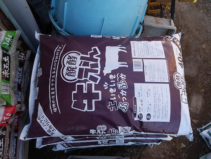 バラの寒肥用に醗酵牛ふん40Lを8個ケイヨーデイツーで買って来た。2021年-005.jpg