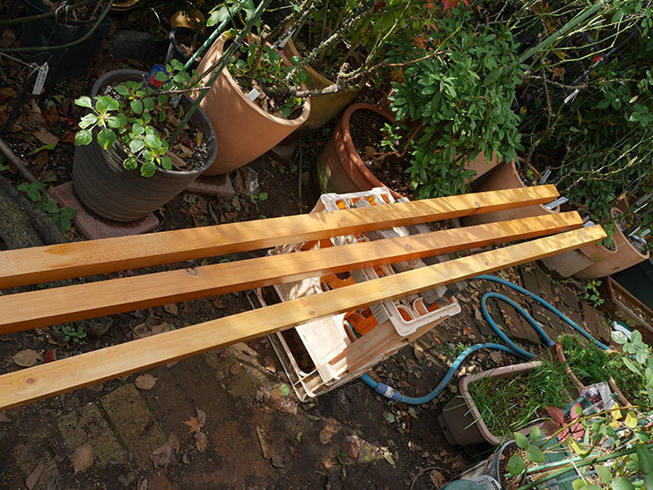 バラの誘引に使う角材、赤松45×45mm-2mに木部保護塗料を塗った5.jpg