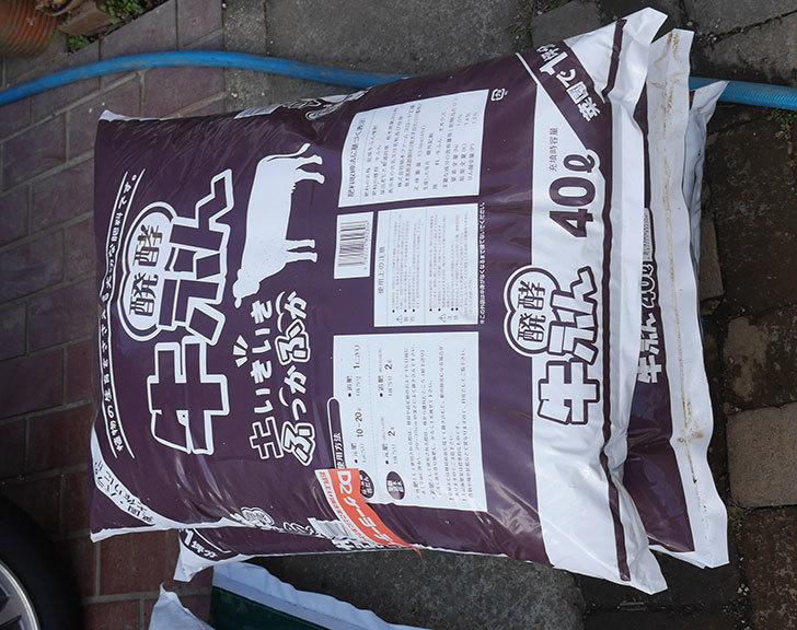 バラ用に醗酵牛ふん40Lを3個ケイヨーデイツーで買って来た。2020年-1.jpg
