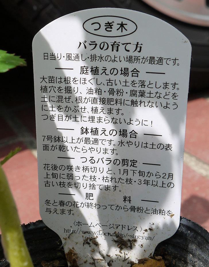 バレリーナ(ツルバラ)の新苗をケイヨーデイツーで買って来た。2016年-4.jpg