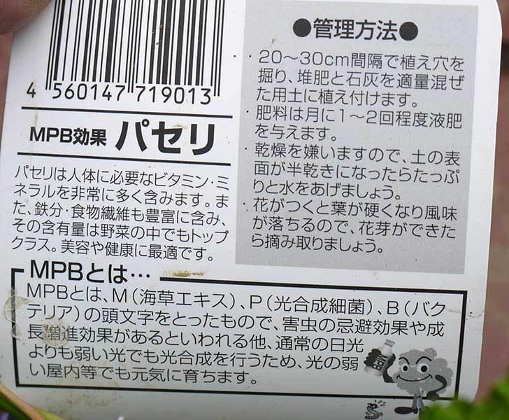 パセリの苗が30円だったので買って来た4.jpg