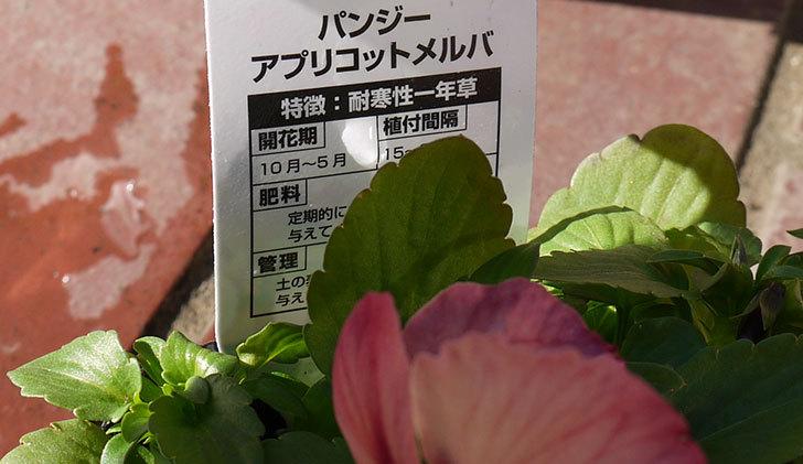 パンジー-アプリコットメルバをケイヨーデイツーで買って来た5.jpg