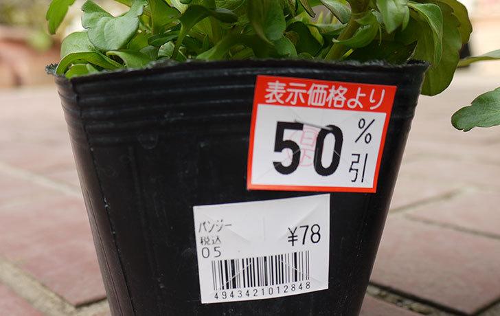 パンジーがケイヨーデイツーで半額で38円だったので8個買ってきた6.jpg