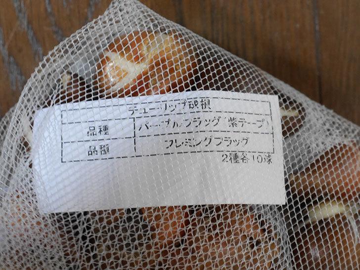 パープルフラッグとフレミングフラッグ(チューリップ)の球根を買って来た。2020年-003.jpg