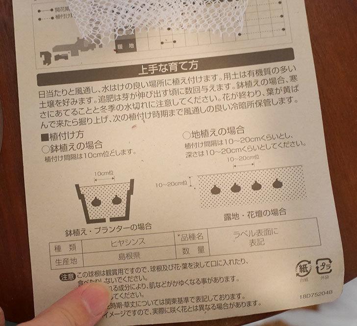 ヒヤシンス-ブルーファンタジーの球根買って来た。2018年-4.jpg