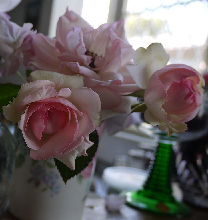 ピエール・ドゥ・ロンサール(ツルバラ)に2番花が咲いた。2017年-7.jpg
