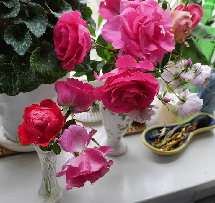 フロレンティーナ(ツルバラ)が返り咲きしたので切り花にした。2017年-4.jpg