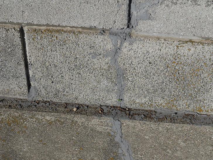 ブロック塀のひび割れの補修をした。2020年-4.jpg