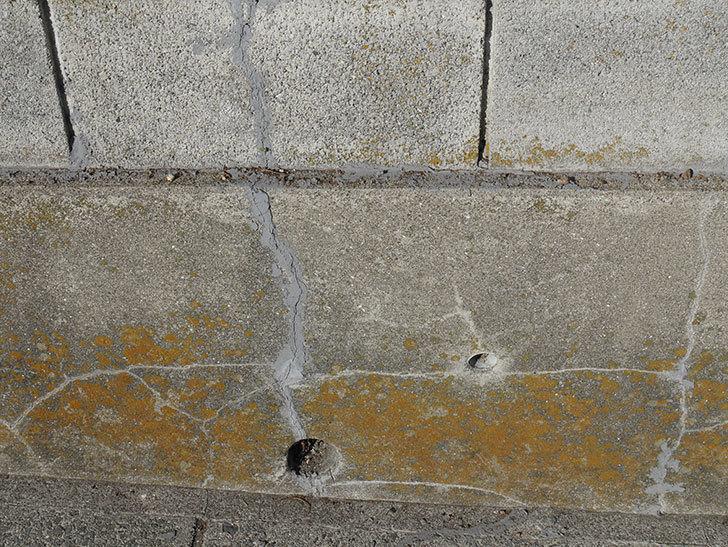 ブロック塀のひび割れの補修をした。2020年-5.jpg