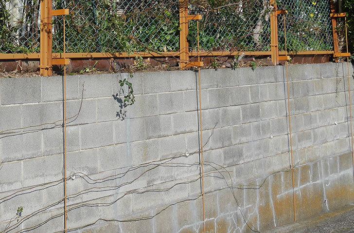 ブロック塀のひび割れの補修跡を塗装した。2020年-4.jpg