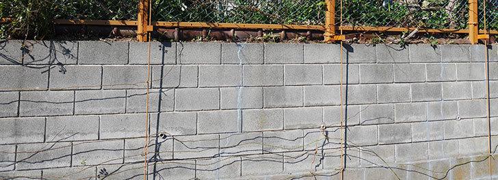 ブロック塀のひび割れの補修跡を塗装した。2020年-5.jpg