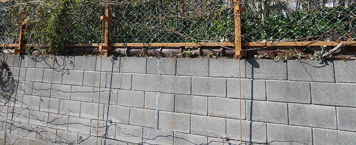 ブロック塀のひび割れの補修跡を塗装した。2020年-6.jpg