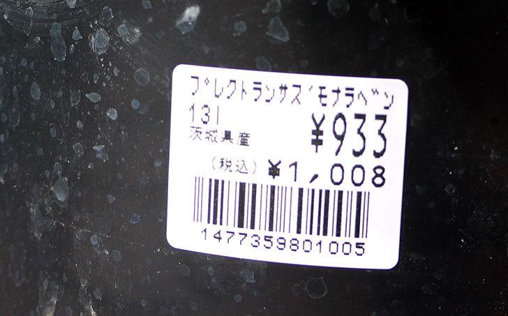 プレクトランサスモナラベンダーをホームズで買って来た5.jpg