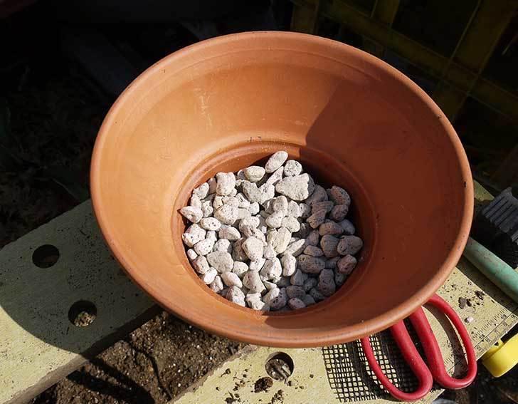ヘリクリサム・カシアナム・ターナーローズ(舞妓さん)を鉢に植えた。2016年-6.jpg