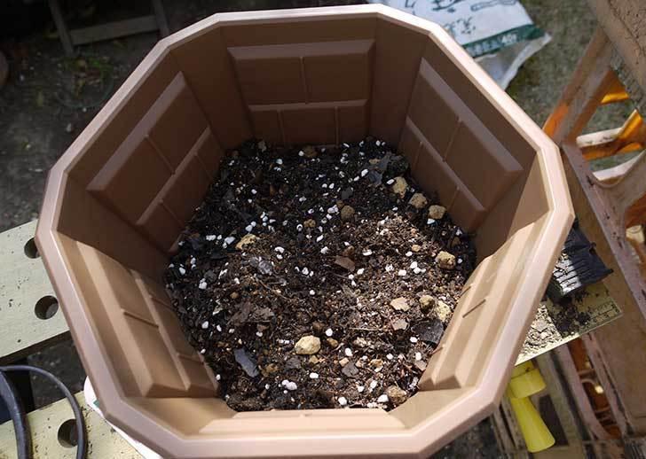 ペチュニア-カリプッチのブルーを鉢に植えた3.jpg
