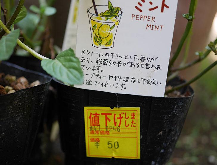 ペパーミントの苗がホームズで50円だったので3個買ってきた。2018年-2.jpg