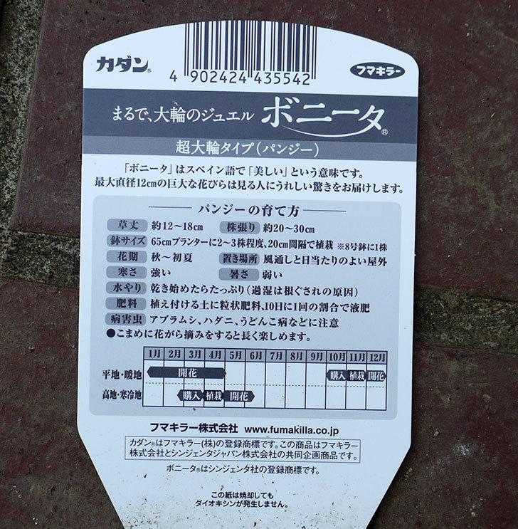 ボニータ(パンジー)がケイヨーデーツーで半額だったので3個買って来た。2016年-8.jpg