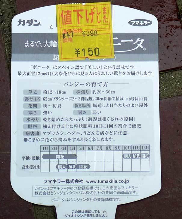 ボニータ(パンジー)がホームズで150円だったので6個買って来た8.jpg