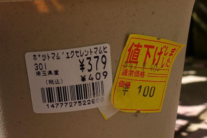 ポットマム-エクセレントマムピコがホームズで100円だったので買って来た4.jpg