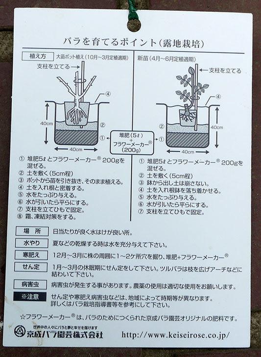 ポンポネッラ(ツルバラ)の開花株をケイヨーデイツーで買って来た。2016年-5.jpg