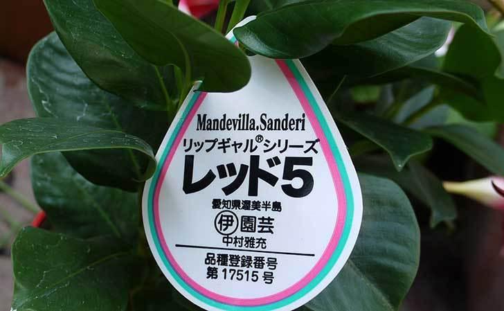 マンデビラ-リップギャルシリーズ-レッド5を買って来た3.jpg