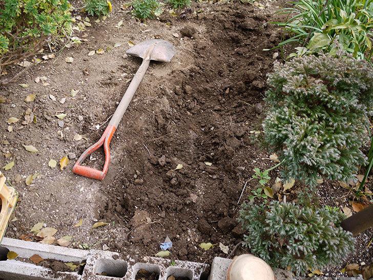 マーブルブリックレンガを花壇に並べてアプローチを作った2.jpg