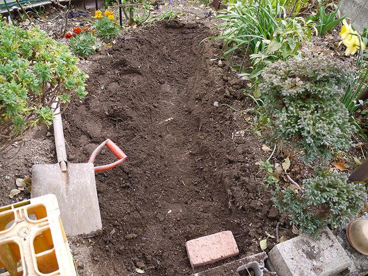マーブルブリックレンガを花壇に並べてアプローチを作った4.jpg