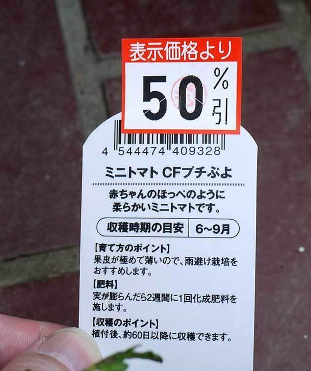 ミニトマト-CFプチぷよがケイヨーデイツーで半額だったので2個買って来た5.jpg