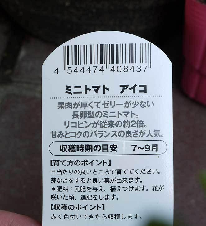ミニトマト-アイコがケイヨーデイツーで半額だったので2個買って来た4.jpg