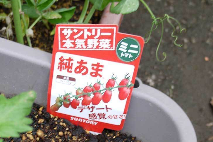 ミニトマト-サントリー-純あまの苗がホームズで100円だったので4個買って来た4.jpg