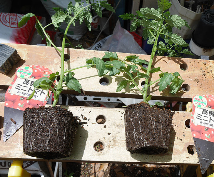 ミニトマトの苗4種類8個をプランターに植えた。2019年-2.jpg