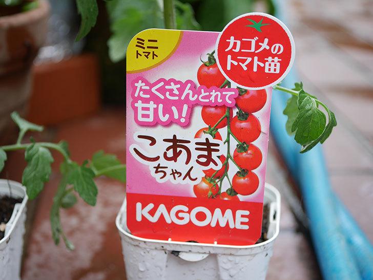 ミニトマトの苗4種類8個をホームズで買って来た。2019年-3.jpg
