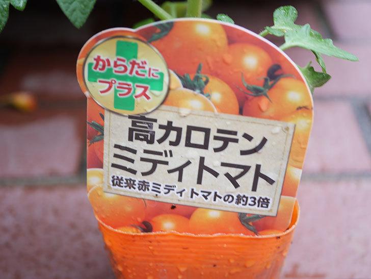 ミニトマトの苗4種類8個をホームズで買って来た。2019年-9.jpg