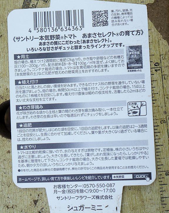 ミニトマトの苗4種類8本をホームズで買って来た。2016年-4.jpg