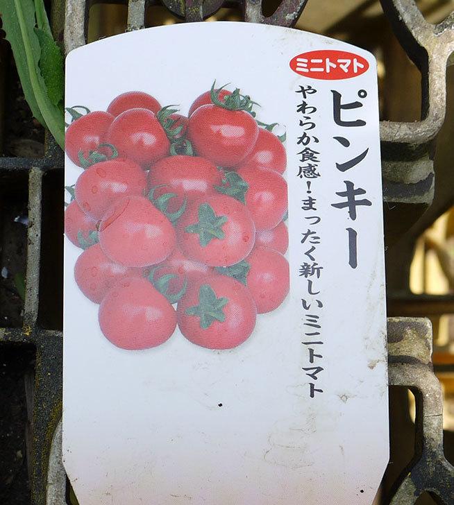 ミニトマトの苗4種類8本をホームズで買って来た。2016年-8.jpg