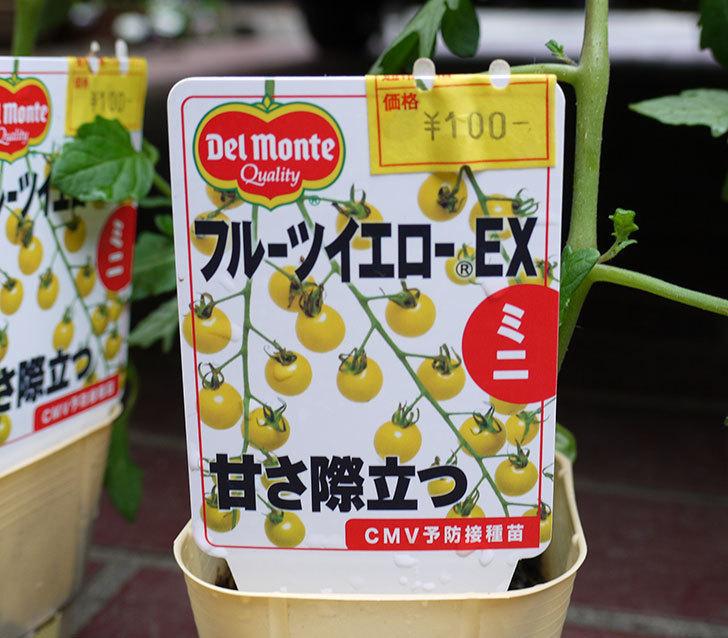 ミニトマトの苗4種類をホームズで買って来た。2017年-11.jpg