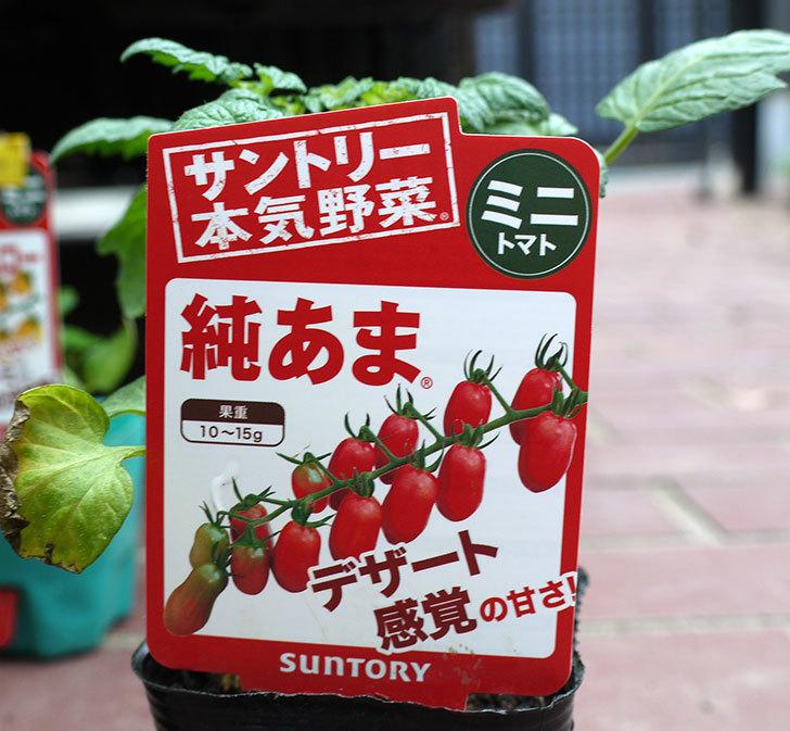 ミニトマトの苗4種類をホームズで買って来た。2017年-7.jpg