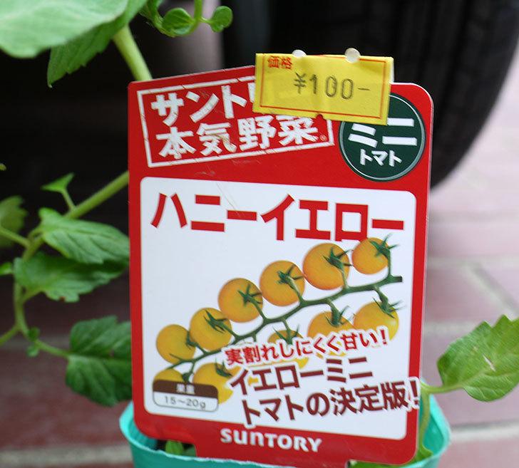 ミニトマトの苗4種類をホームズで買って来た。2017年-9.jpg