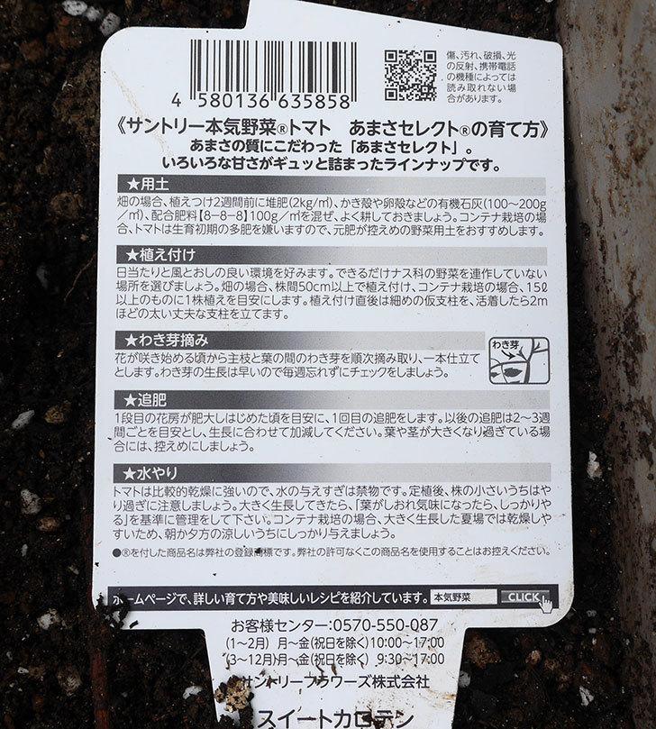 ミニトマトの苗4種類をホームズで買って来た。2018年-10.jpg