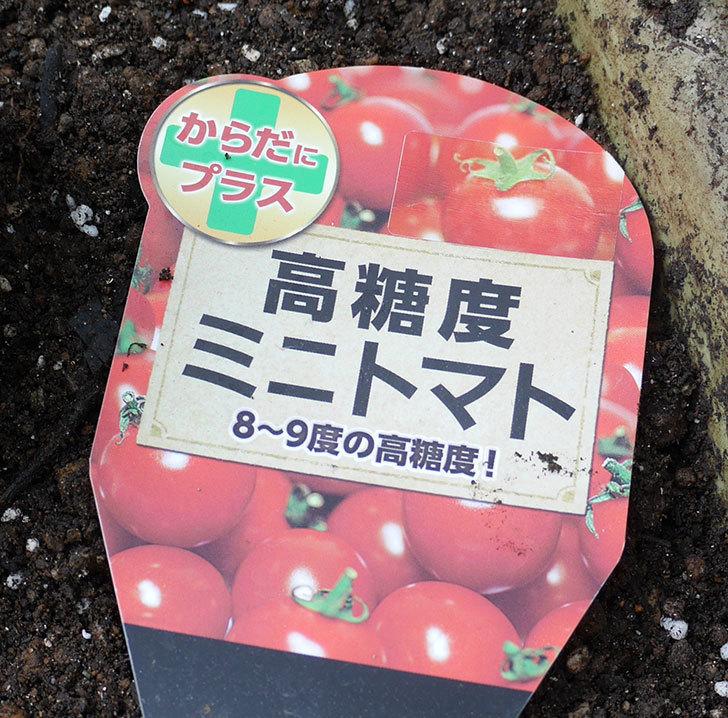 ミニトマトの苗4種類をホームズで買って来た。2018年-12.jpg