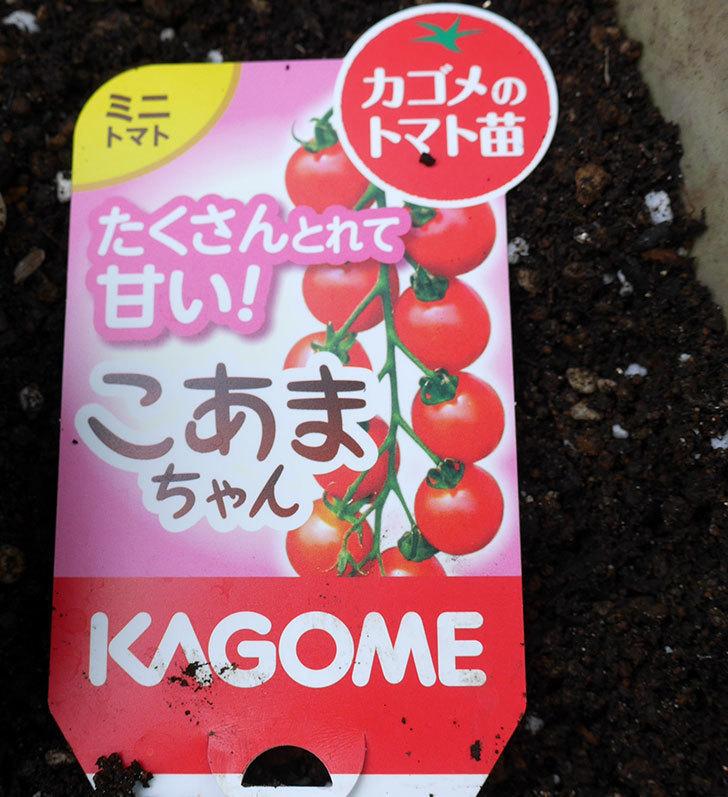ミニトマトの苗4種類をホームズで買って来た。2018年-3.jpg