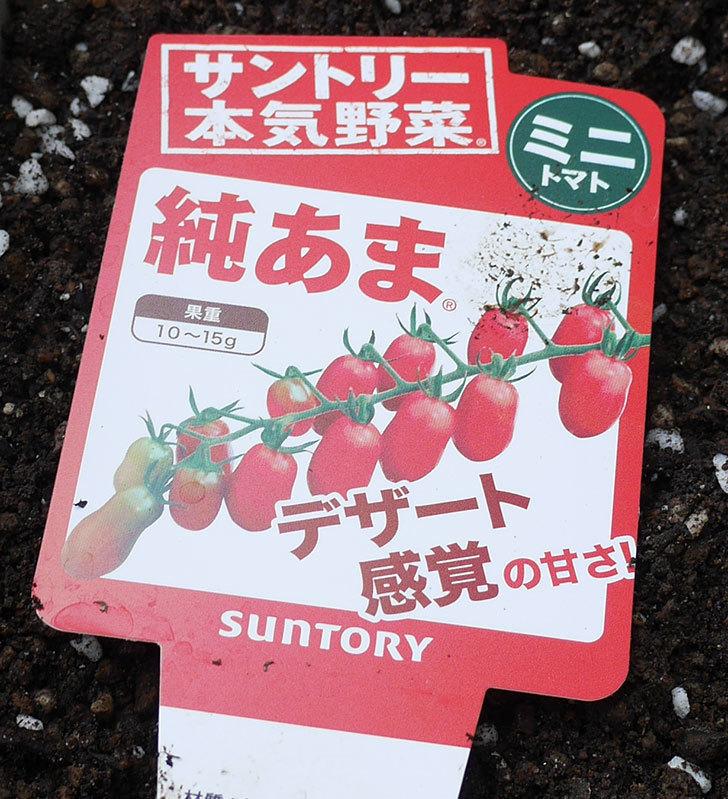 ミニトマトの苗4種類をホームズで買って来た。2018年-6.jpg