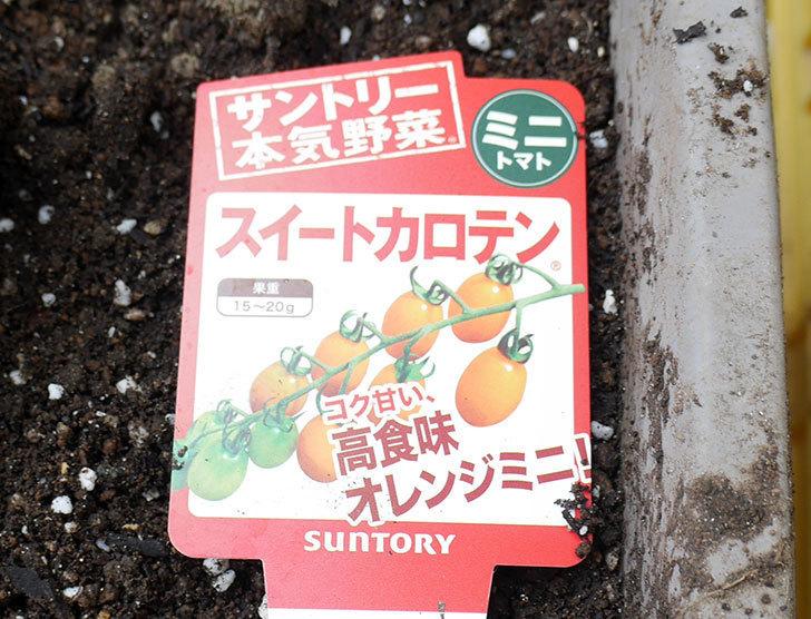 ミニトマトの苗4種類をホームズで買って来た。2018年-9.jpg