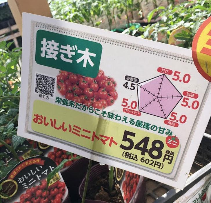 ミニトマトの苗アイコ1株とおいしいミニトマト2株をホームズで買って来た。2020年-5.jpg